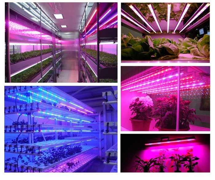 фитолента для роста растений