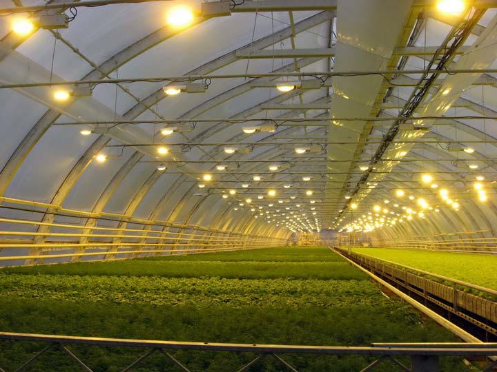 применение лампы днат для выращивания растений в теплицах