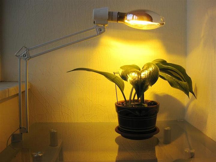 освещение растений зеленым цветом