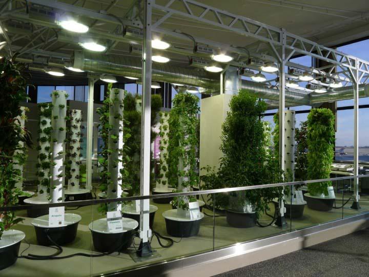 как освещать растения светильником