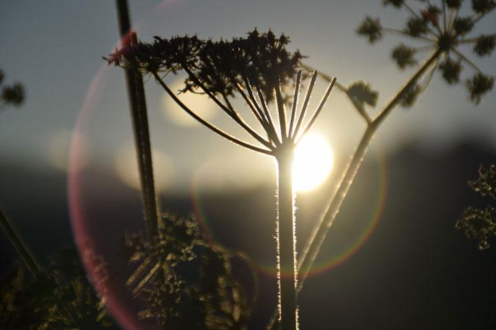заход солнца и интенсивность света на рост растений