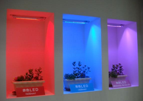 разница при освещении растений разными цветами