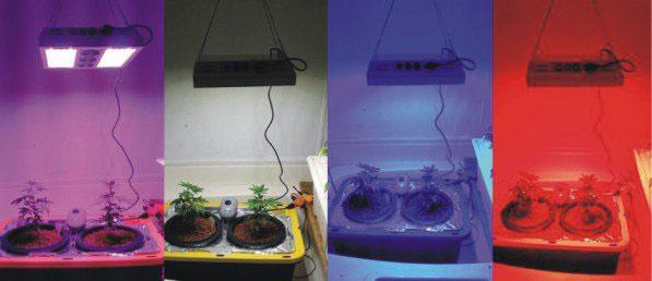 эксперимент с освещением растений разным светом