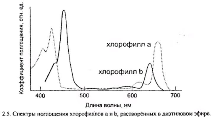 график поглощения хлорофилла растениями при разной засветке