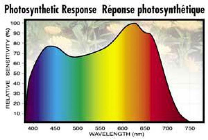 поглощение света разных цветов растениями какие фитолампы лучше