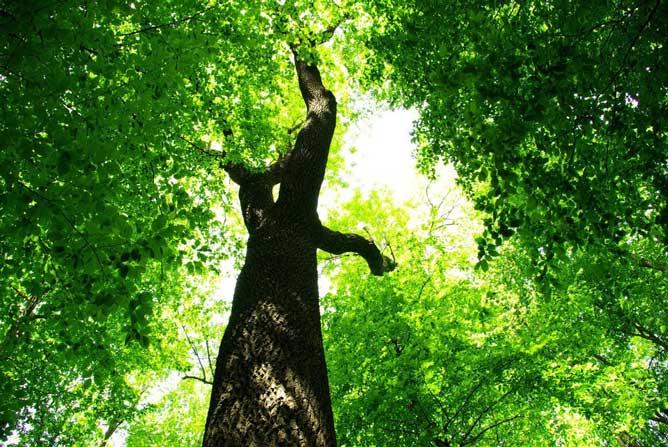 когда зеленый цвет полезен в свете солнечном