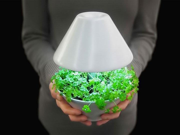 правильный свет для растений теория