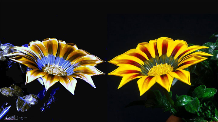 разница между зрением пчел и человека