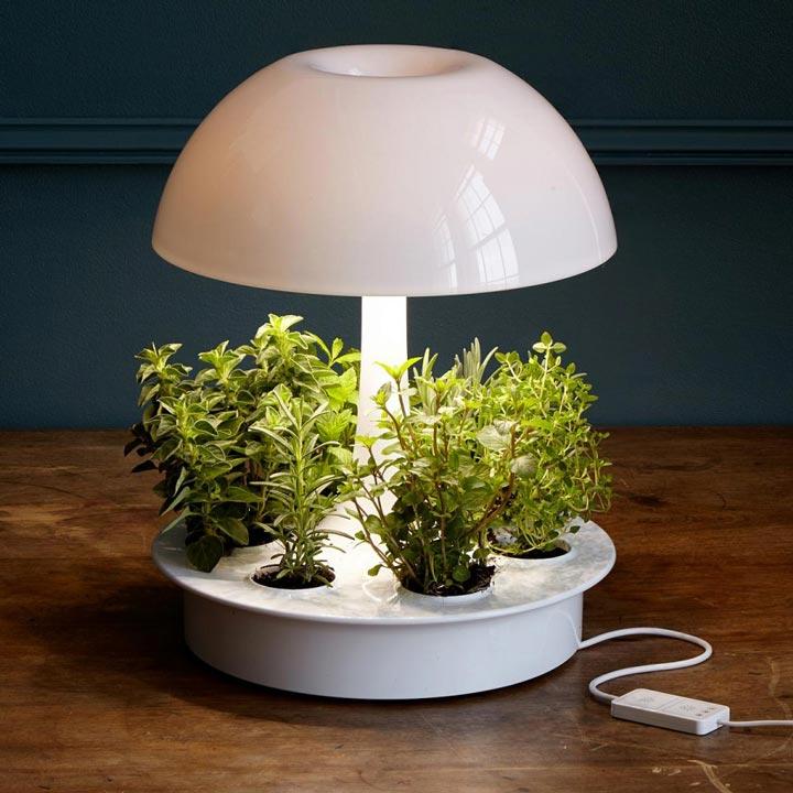 как освещать растения разным цветом