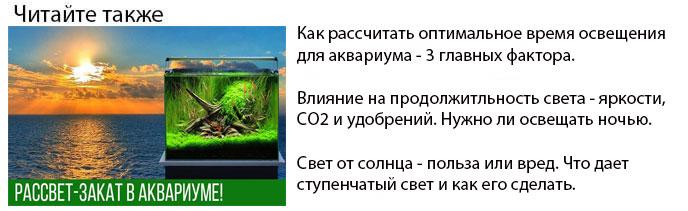 как рассчитать время освещения для аквариума и продолжительность светового дня
