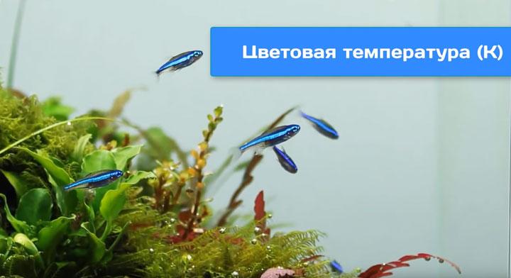 цветовая температура и ее влияние на освещение в аквариуме
