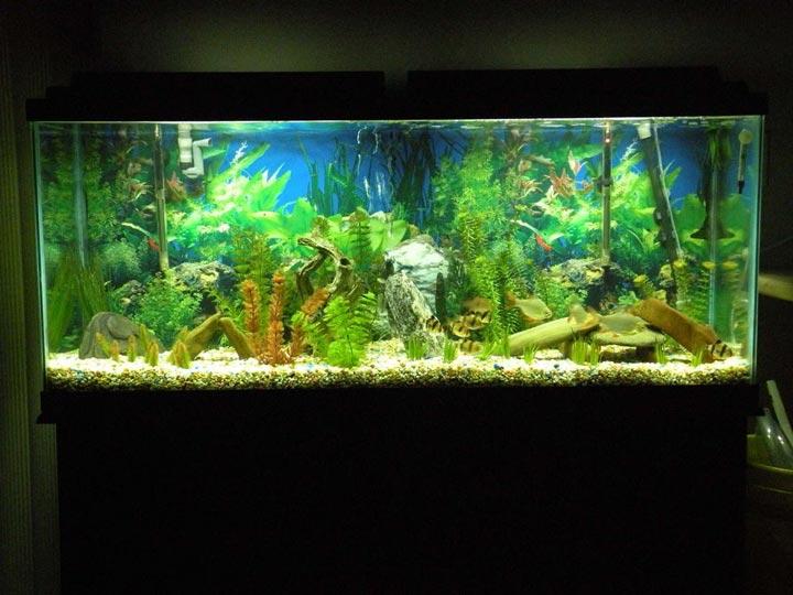 красивая подсветка аквариума дома