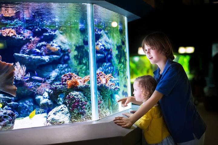 как рассчитать мощность и количество света для аквариума