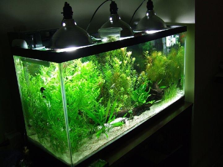 выбор освещения аквариума для растений