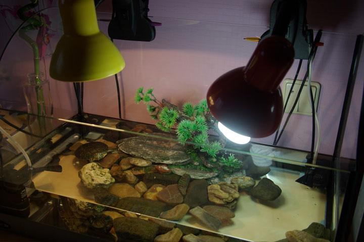 освещение аквариума лампочками накаливания и энергосберегайками