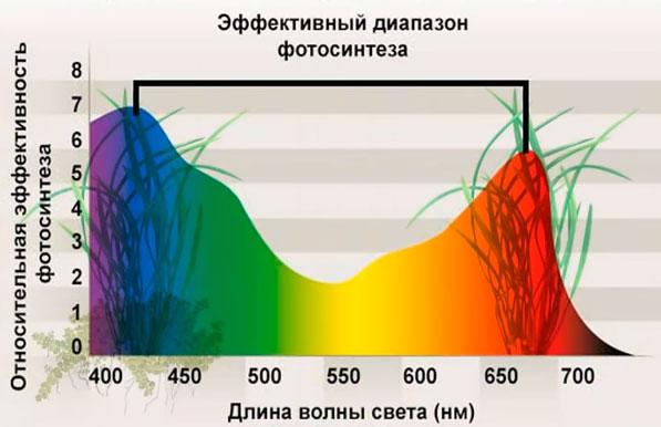 график зависимости фотосинтеза растений от длины волны и цвета освещения