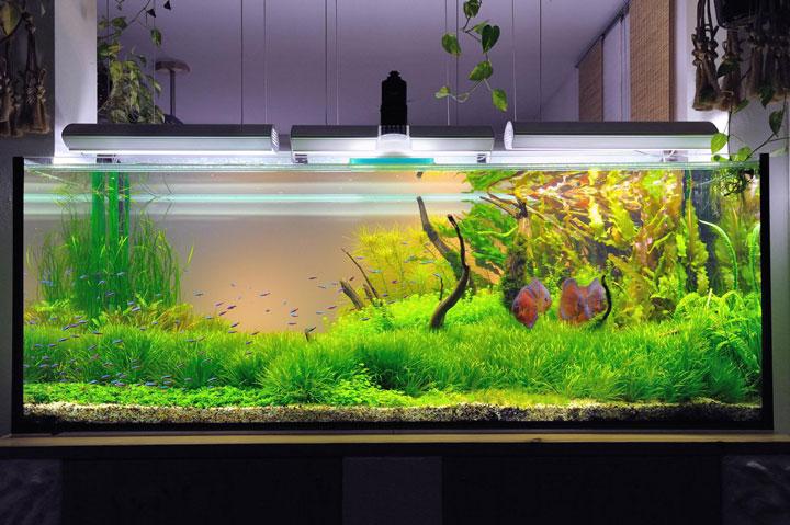 подсветка аквариума современными светодиодными светильниками