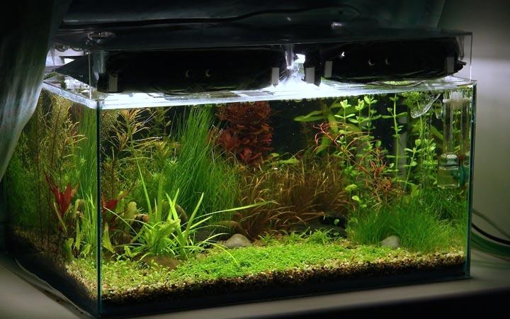 подсветка аквариума металлошалогенными светильниками