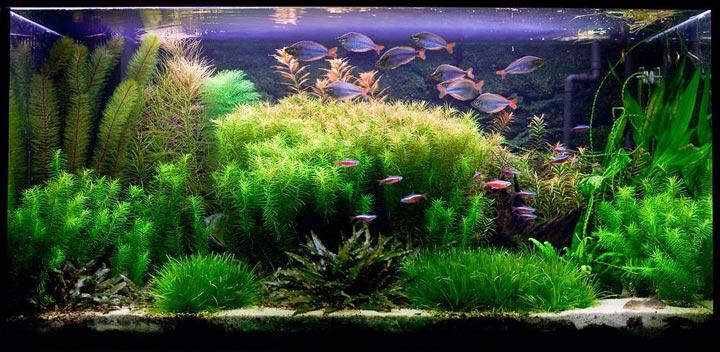 густой травник для аквариума