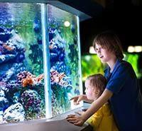 правильный метод расчета освещения в аквариуме