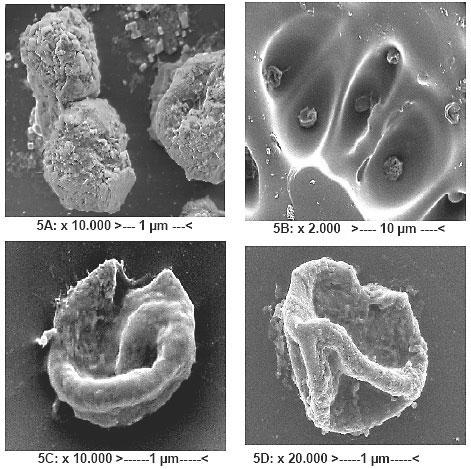 какой длины ультрафиолет убивает бактерии
