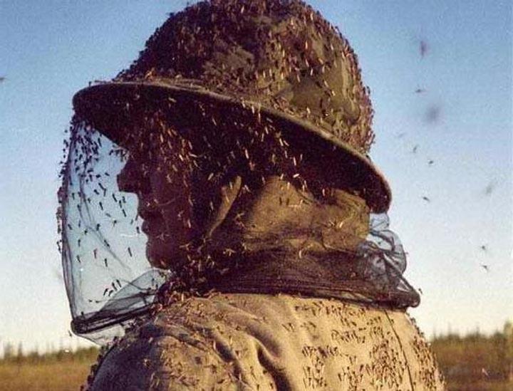 как человек притягивает комара и как от него защититься