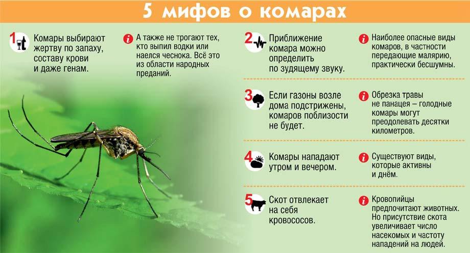 5 мифов про комаров