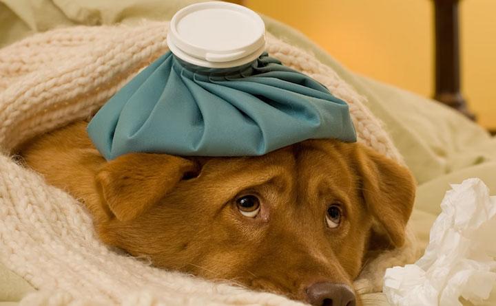 как влажность сказывается на собаках