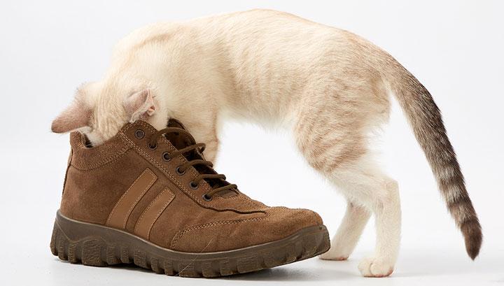 плохо пахнет обувь как избавиться