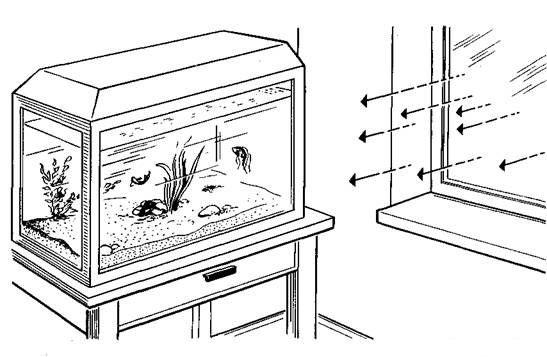 прямые лучи солнца запрещены для аквариума