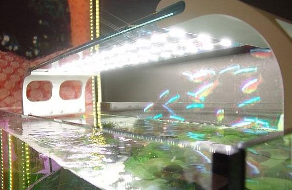 открытый аквариум без подачи со2