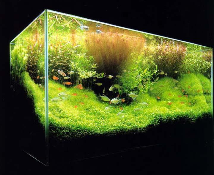 густой травник аквариум