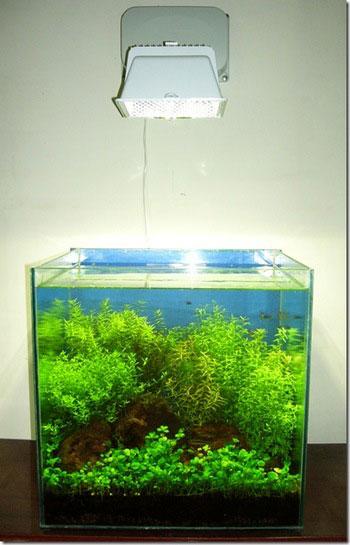 регулировка уровня освещенности аквариума высотой и местом установки светильника
