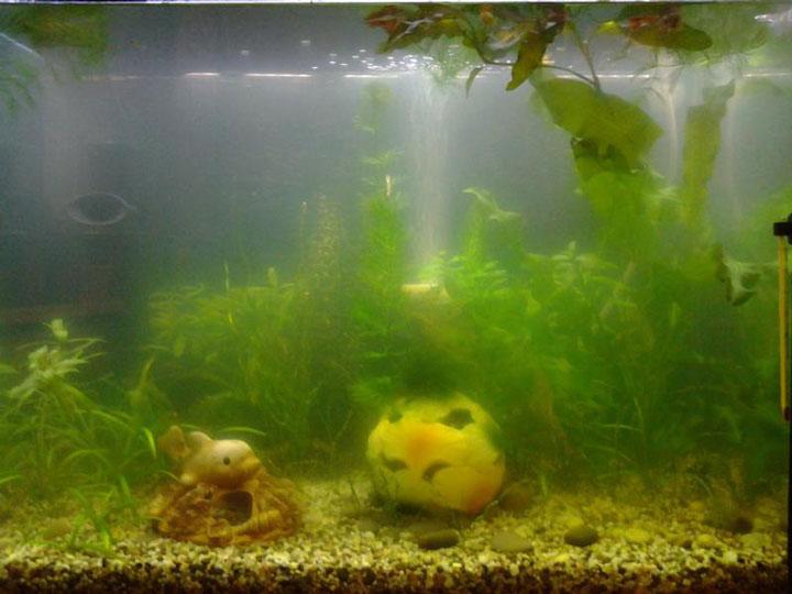 переизбыток света в аквариуме