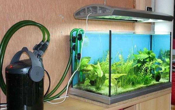 принудительная подача углекислого газа в аквариум как со2 влияет на время освещения