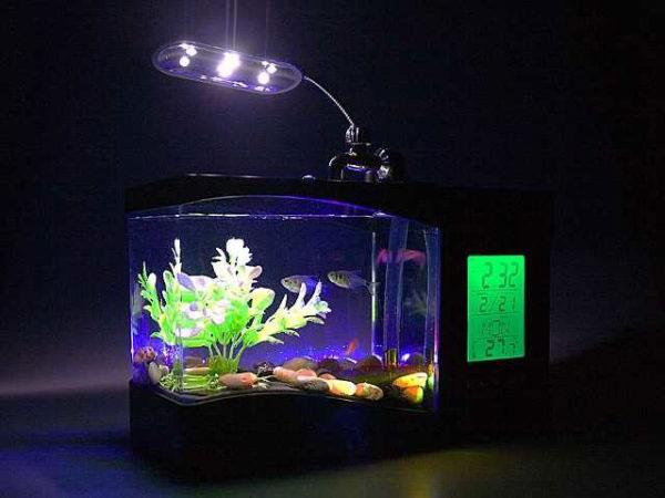 сколько времени нужна подсветка аквариума