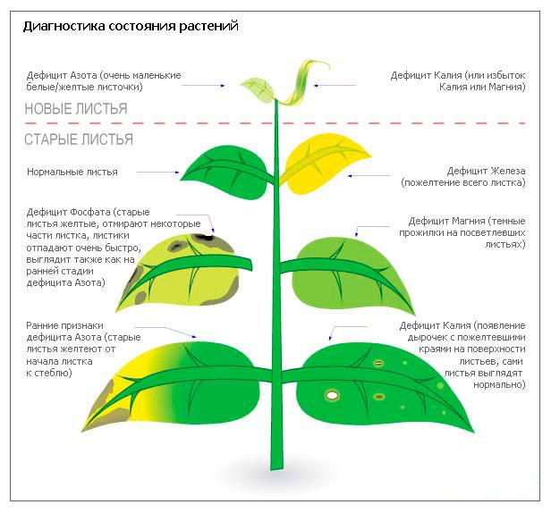 влияние удобрения на внешний вид растений в аквариуме