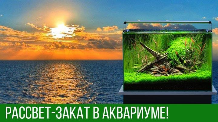 как регулировать время освещения в аквариуме травнике и для рыбок