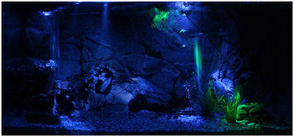 слабое освещение аквариума и его продолжительность