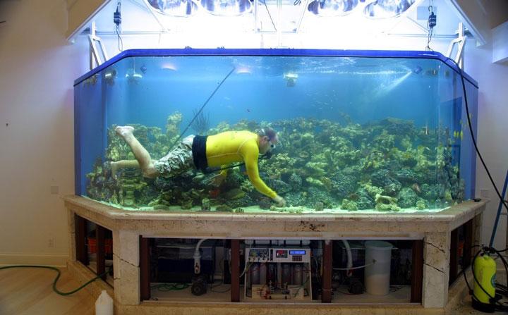 Сколько времени должен гореть свет в аквариуме