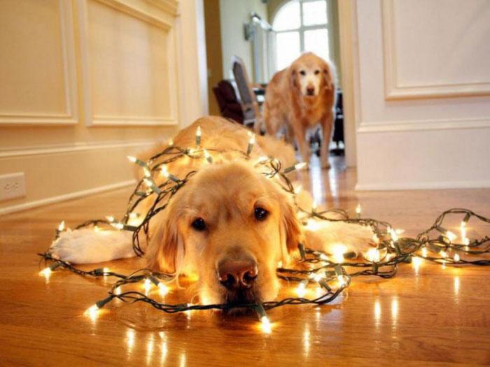 где нельзя вешать гирлянду новогоднюю