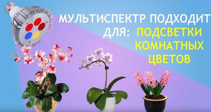 досветка комнатных растений мультиспектровой лампой