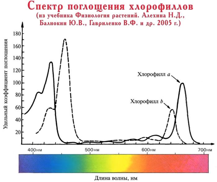 интенсивность фотосинтеза растений в зависимости от спетра волны