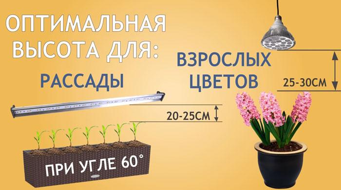 разница высоты подвеса фитолампы для рассады и взрослых растений