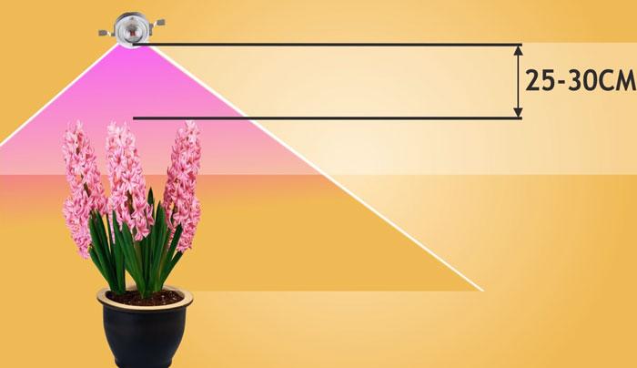 перемещение фитолампы при росте растений