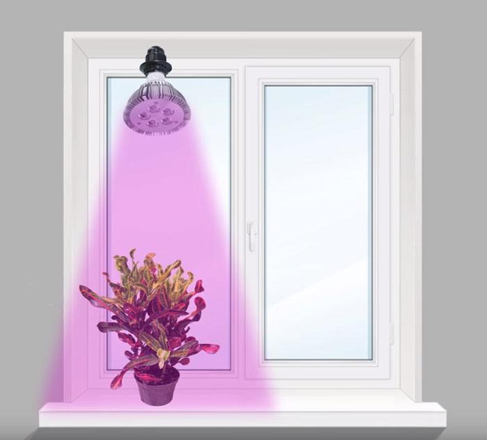 освещение растения на подоконнике