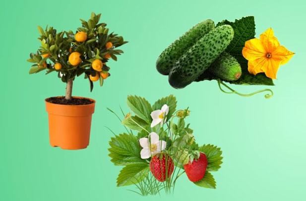 растения с цветением и плодами какая мощность фитолампы
