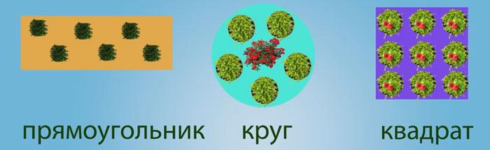 как размещать растения под фитолампами