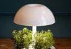 как подсвечивать рассаду и растения фитолампами