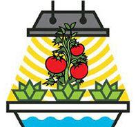 вредны ли фитолампы и фитоосвещение для растений для человека